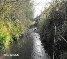Barnakyle River, Patrickswell
